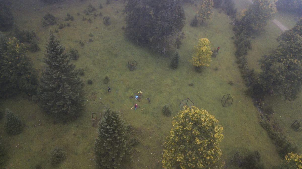 Sieger pflanzen Ahornbäume